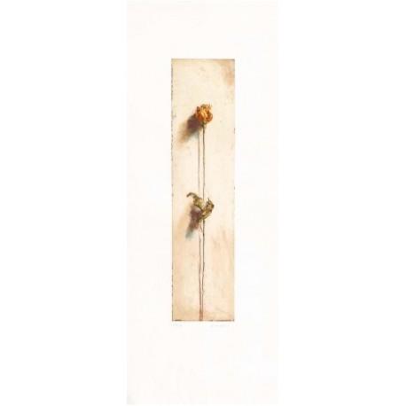 Americo Salvatori - Le rose di Camilla 1